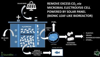 Bionic Leaf project that can 'make food out of thin air' receives $100,000 Amazon Catalyst grant