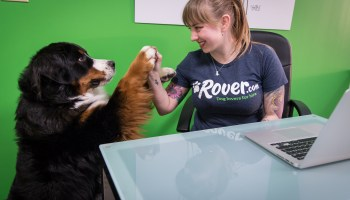 Rover raises $65M round led by Spark Capital as pet-sitting startup aims for international expansion