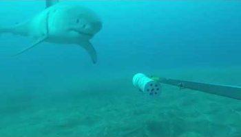 Watch: Huge great white shark bites underwater camera used in Paul Allen's FinPrint project