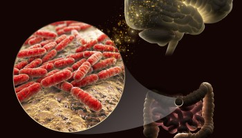 Microbiome and brain function