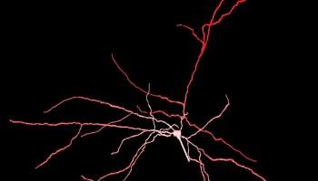 Neuronal firing