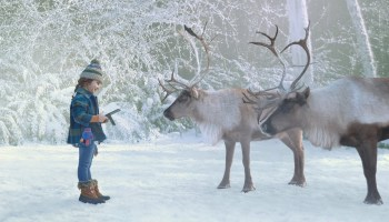 Microsoft sleighs 'em again in holiday ad as girl uses translation technology to speak to reindeer