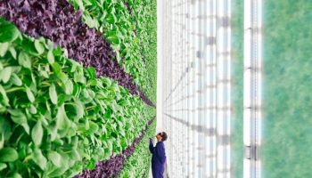Jeff Bezos-backed vertical agriculture startup Plenty 'hibernates' plans for Seattle farm