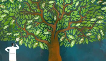 DNA evolutionary tree