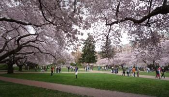 华盛顿大学加入了越来越多需要COVID-19疫苗的大学名单