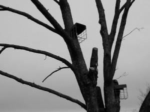 albero_richiami
