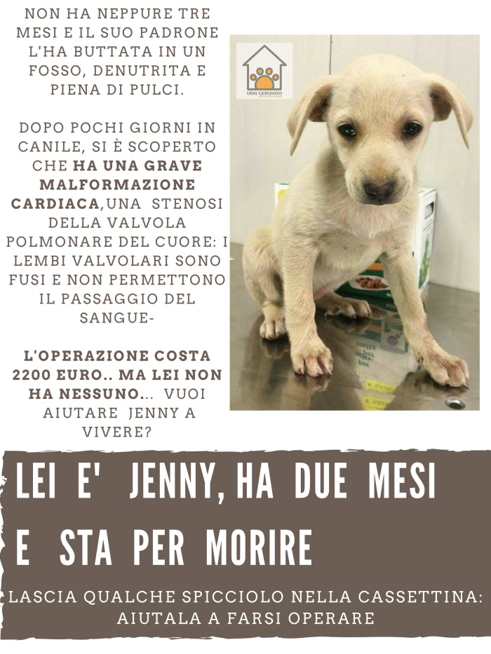 jenny necessita cure_Fotor
