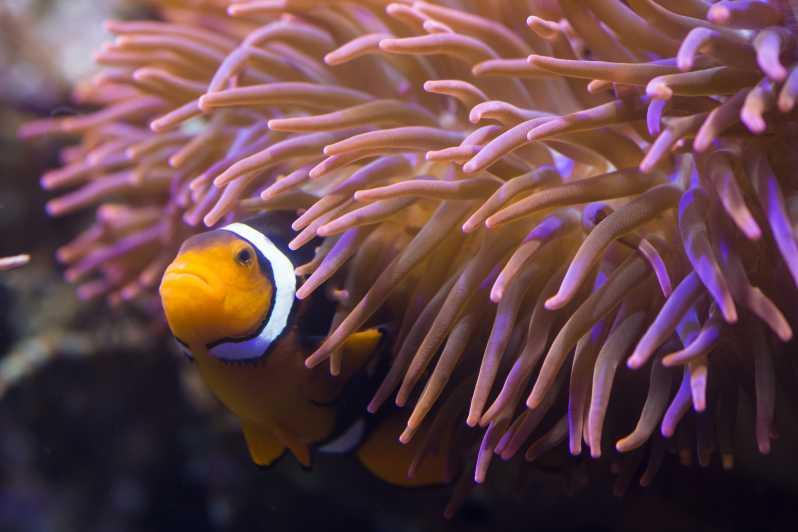 Sea Life Hannover Eintrittsticket Hannover Deutschland Getyourguide