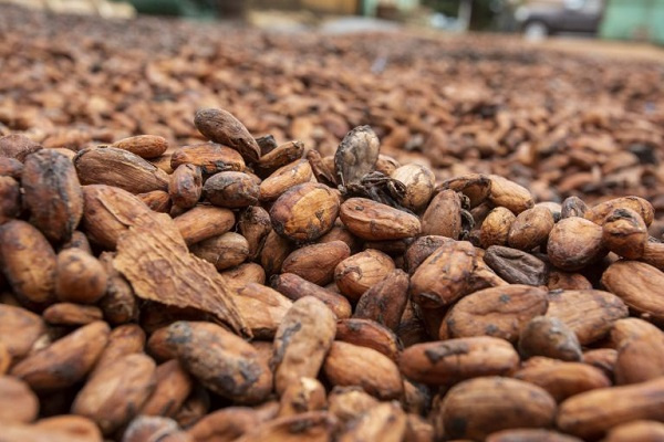 Ghana, Ivory Coast cancel cocoa sustainability schemes run by Hershey