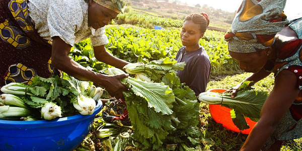 OCP Africa trains 200 agric extension agents, farmer aggregators
