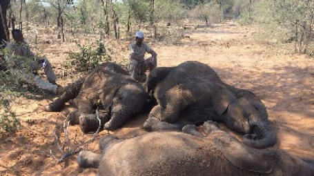 Botswana probes death of 56 elephants – Nam News Network (NNN)