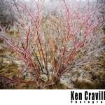 Oshkosh Wisconsin Winter Ice Storm Photo Ken Cravillion Photography