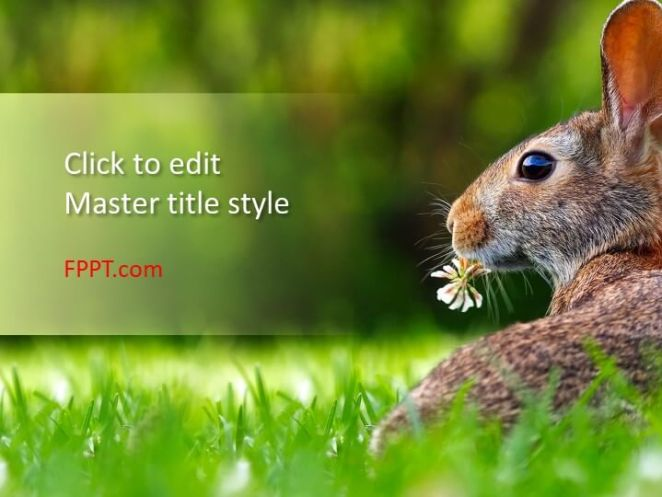 Hare PowerPoint template
