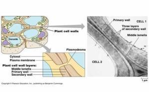 เรื่องเล่าเกี่ยวกับเซลล์ (๗) : Cell Surface and Functions