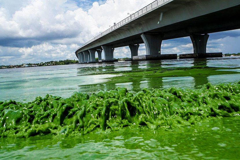The Primary Cause of Florida's Toxic Algal Blooms Completely Ignored