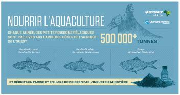 Chaque année plus de 500 000 tonnes de poissons pélagiques sont prélevés au large de l'Afrique de l'ouest pour nourrir l'aquaculture.