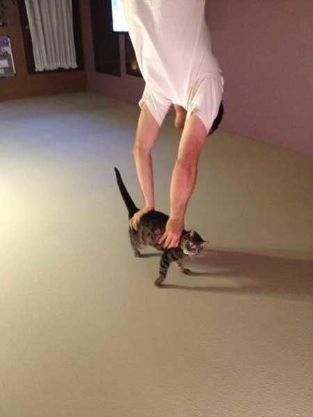 1 Cirque Du Soleil Kitty