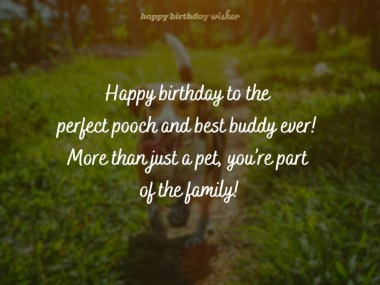 Happy Birthday Dog Cute And Lovely Wishes For A Dog S Birthday Happy Birthday Wisher