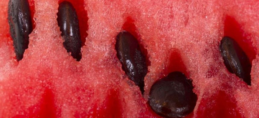 Close-up of a slice of watermelon with seeds.