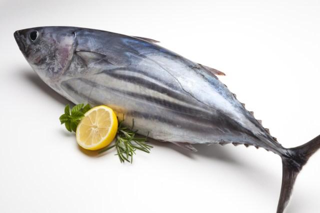 Image result for Ikan tuna