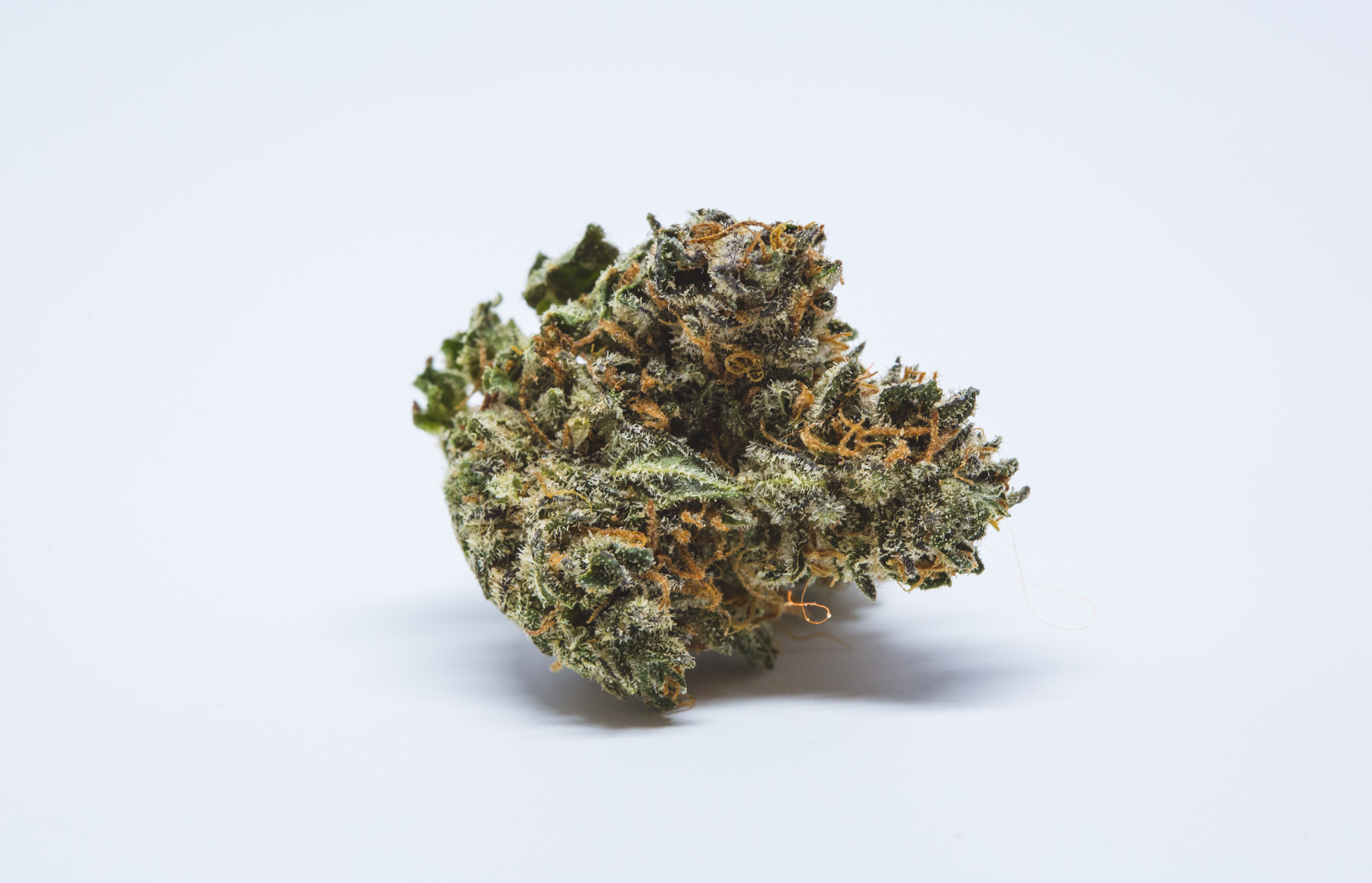 Allevi8 Blue Dream 39 Weed in the Morning: Wake and Bake Strains to Start Your Day