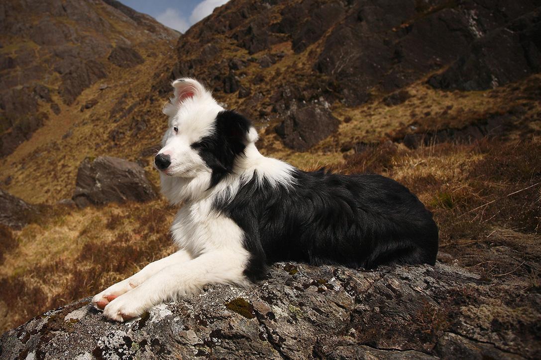10 Best Hiking Dog Breeds HiConsumption