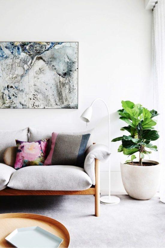 big indoor plants Ficus lyrata