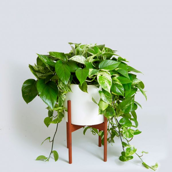 Best Place Buy Hanging Plants
