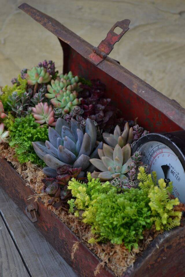 Making Succulent Planter