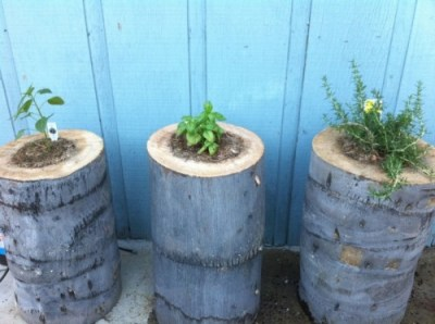 ceppi di legno trasformati in fioriere