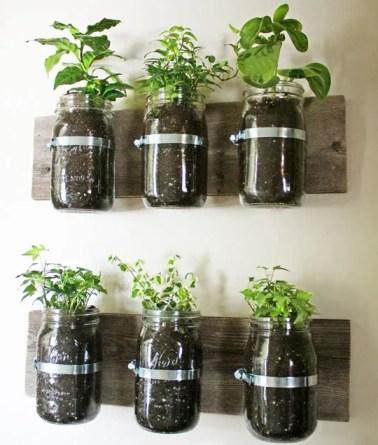erbe aromatiche coltivate in barattolo