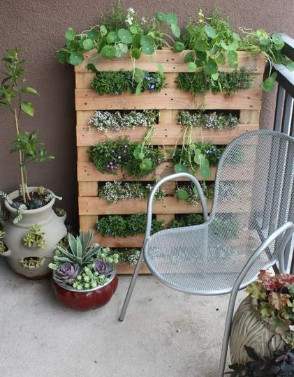 set di piante dentro un bancale