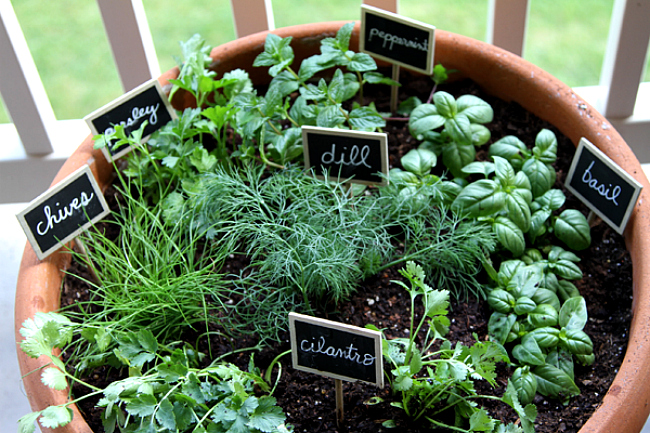 Indoor Herb Garden Plant Decor Herbs Single Pot Planter with Various Kitchen Herbs and Labels