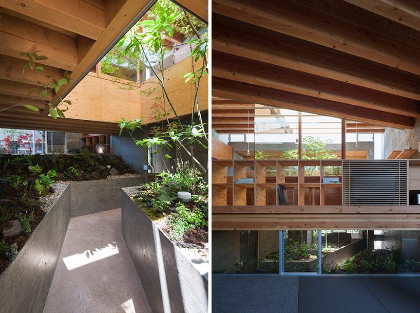 Uid Architect shirmp tree inside