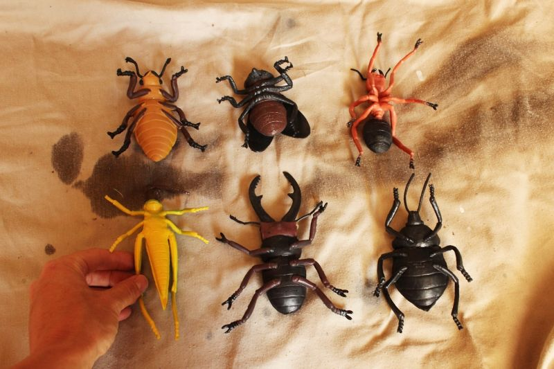 DIY Insect Taxidermy- prepare the bugs