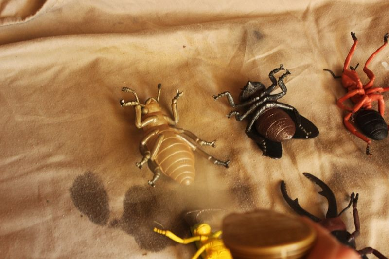 DIY Insect Taxidermy- start srpaying