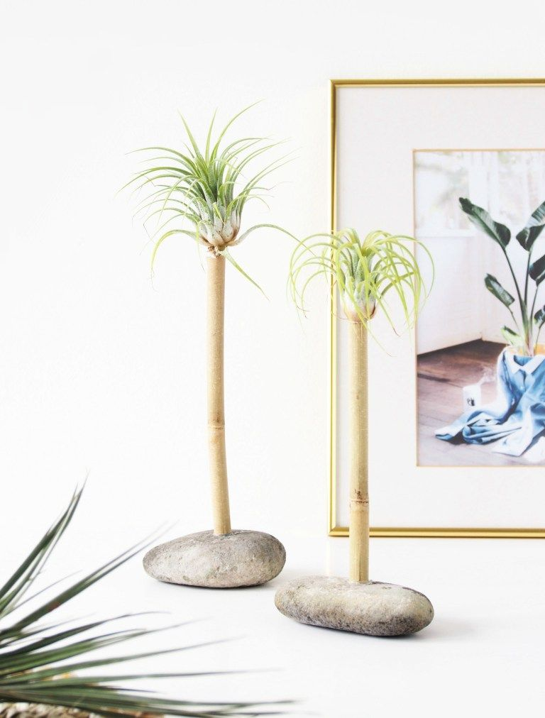Air plant palms