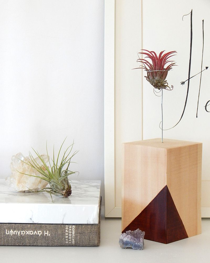 DIY air plant stand