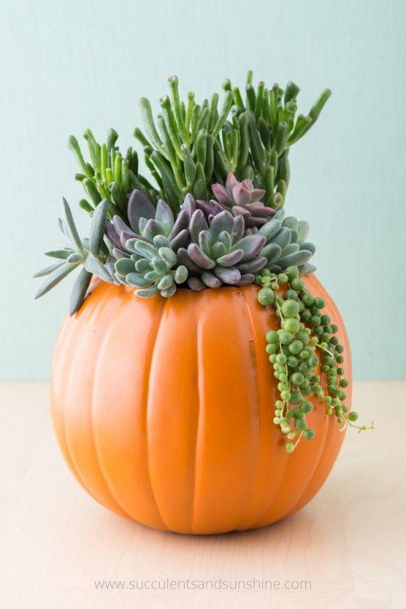 Creating a succulent planter from pumpkin