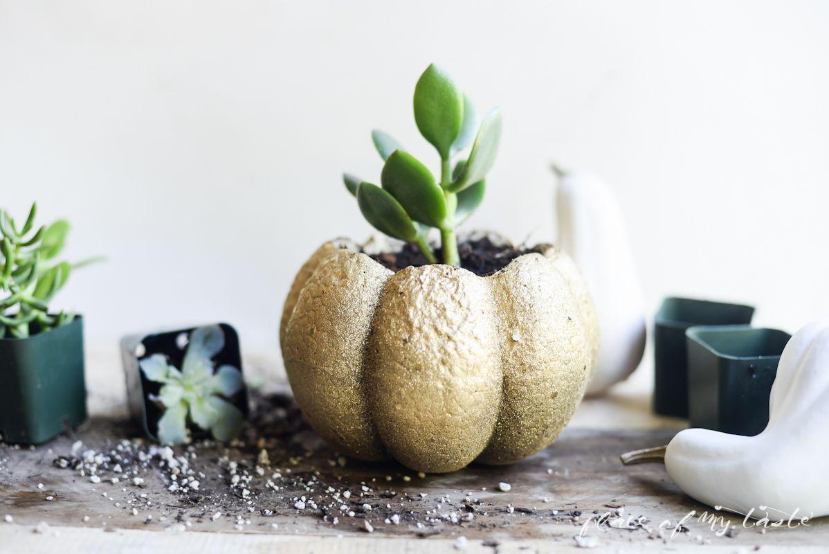 Succulent pumpkin planter