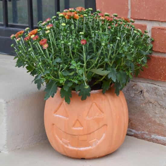 Terra cotta pumpkin planter