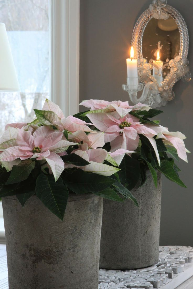 Rose quartz poinsettias