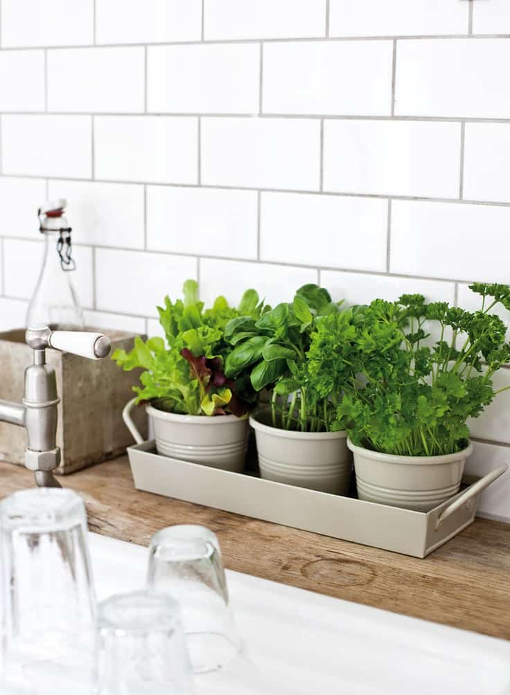 Design Your Own Herb Garden