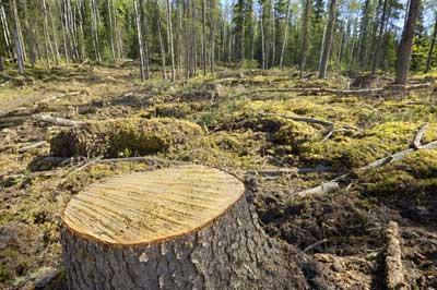 Image result for images of deforestation