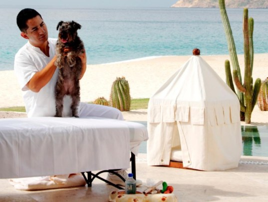 A dog getting a massage at the Las Ventanas al Paraiso hotel in Cabo San Lucas in Mexico. Photo: Las Ventanas al Paraiso, Cabo San Lucas