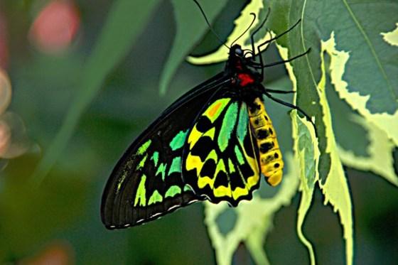 Hugh!  Inilah 10 serangga raksasa hari ini