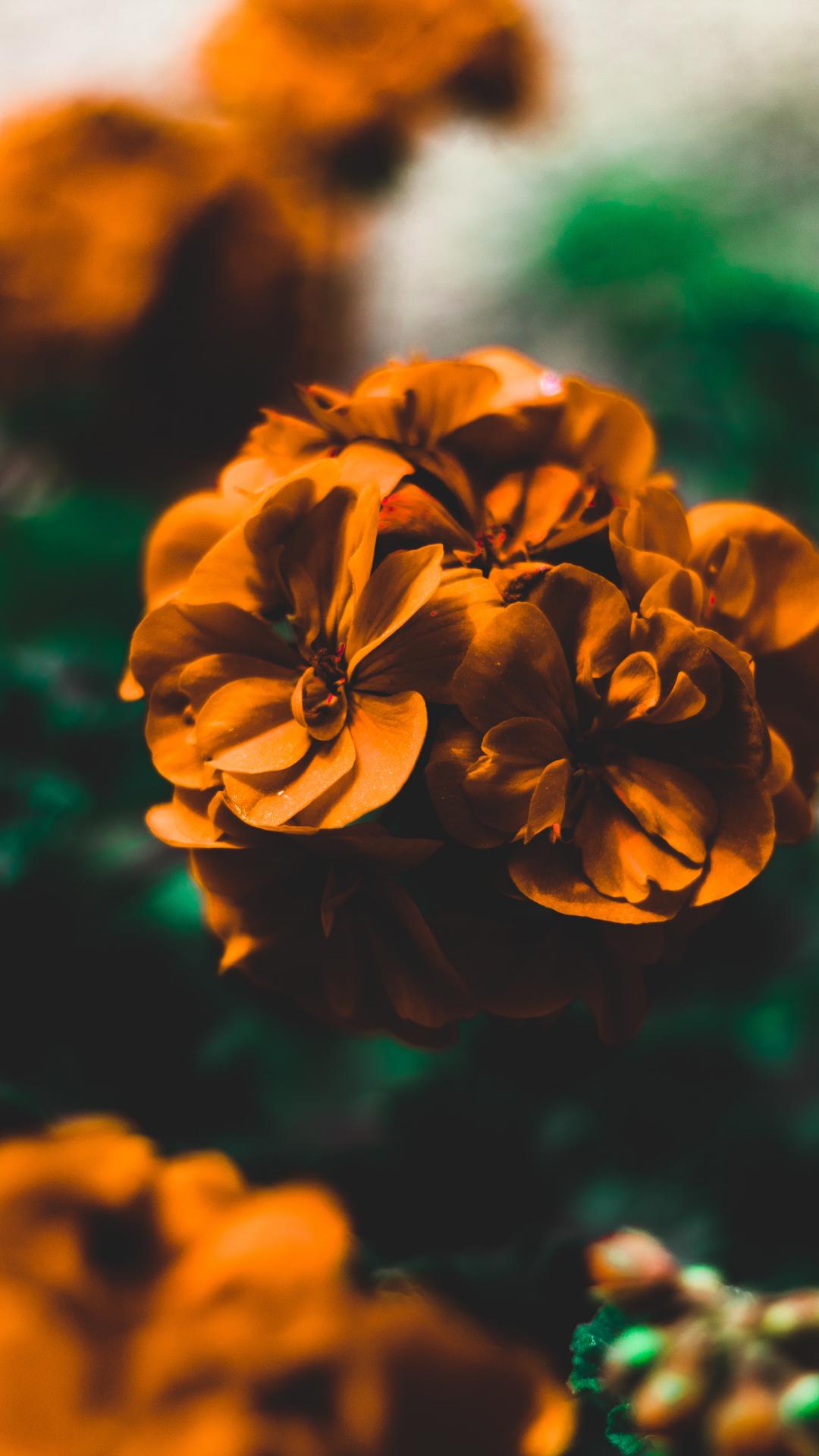 A Gentle Flower Iphone Wallpaper Idrop News