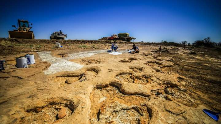 Trackway Discovered In Australia Containing Footprints Of