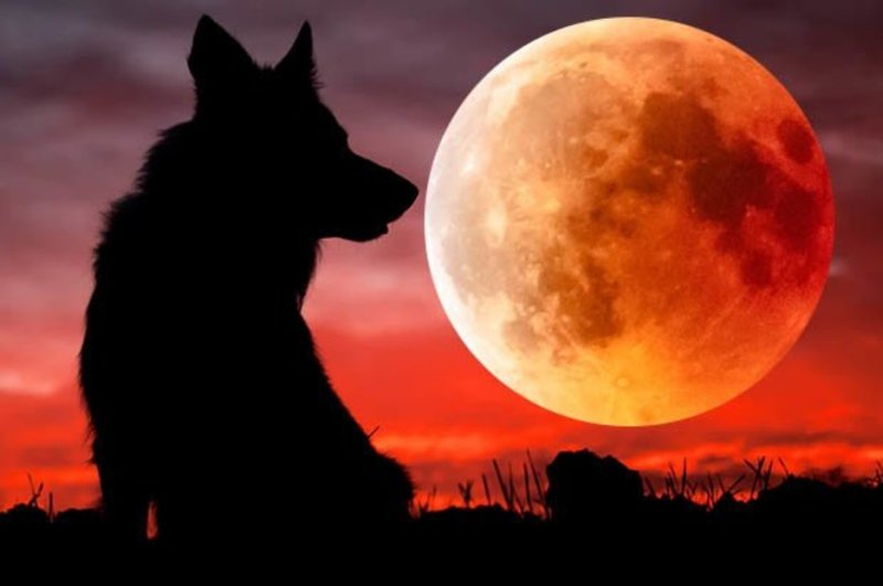 Eclipse 2019 What Is A Super Blood Wolf Moon When Will Total Lunar