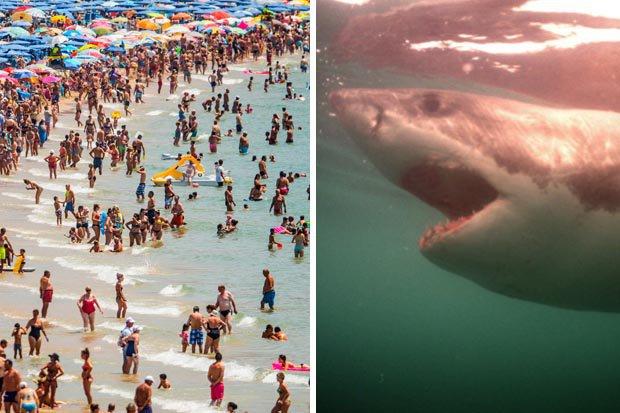 Spain shark attack